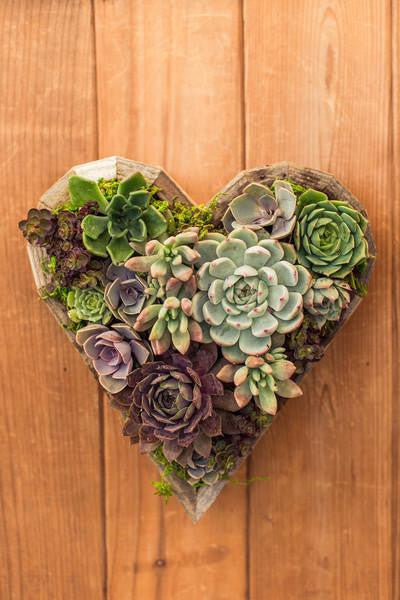 Valentine Succulent Heart Workshop -Saturday, February 8th at 3pm