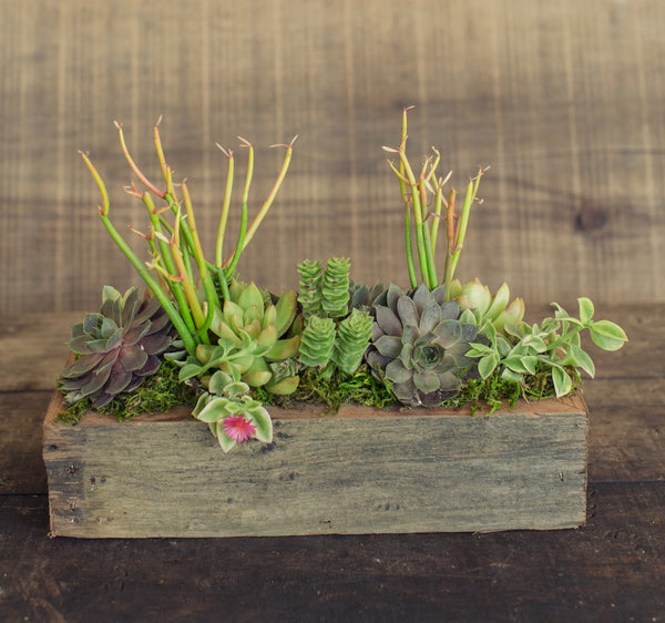 Reclaimed Wood Succulent Pot Up