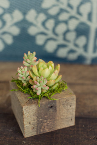 Reclaimed Wood Succulent Planters