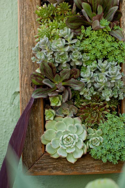Vertical Succulent Wall Workshop -Saturday, July 27th at 2PM
