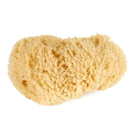 Natural Sea Sponge Graftobian - Backstage Cosmetics Canada