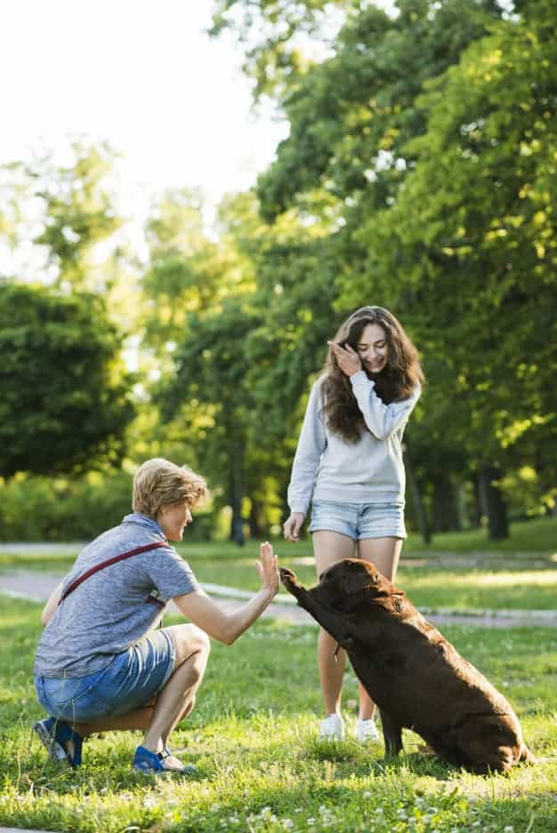 10 Ways to Make your Dog's Life Better