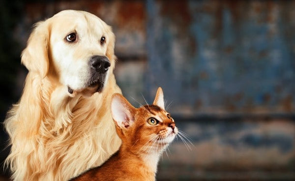 Trivia About Dogs and Cats: 10 Exciting Facts About Your Pet