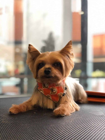 What lessons am I learning from my Pets?
