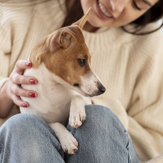 10 Amazing Facts about your Dog