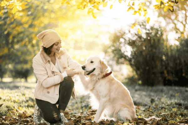 5 Essential Commands you should teach your Dog