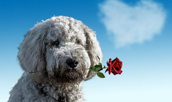 6 Fun ways to Spend Valentine's Day with your Pet