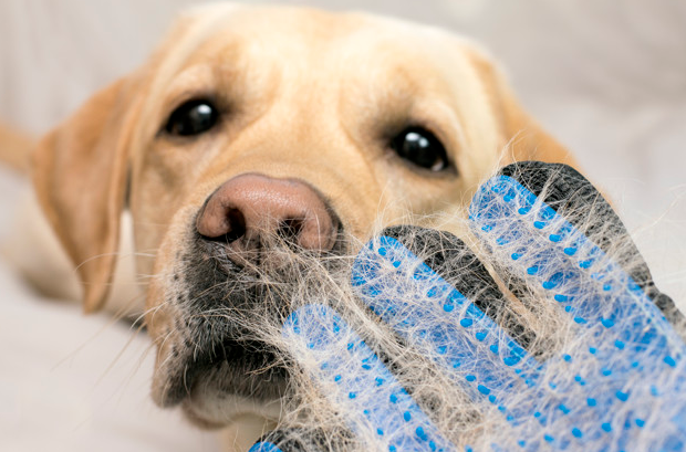 7 Effective Tips to Control Excess Dog Hair
