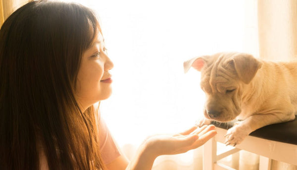 7 Surprising ways to show your pet you Love them