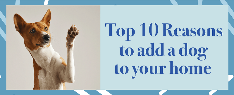 Top 10 Reasons to add a dog to your home
