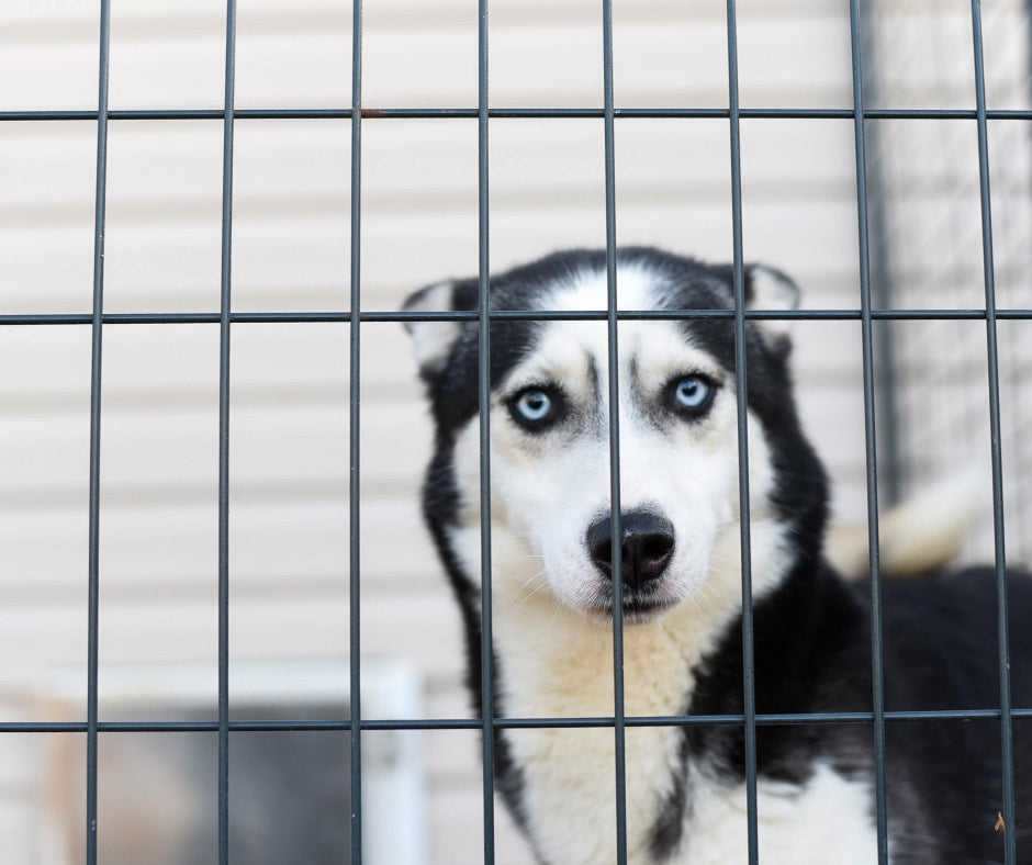 Cage Training for Dogs: Is it Ethical