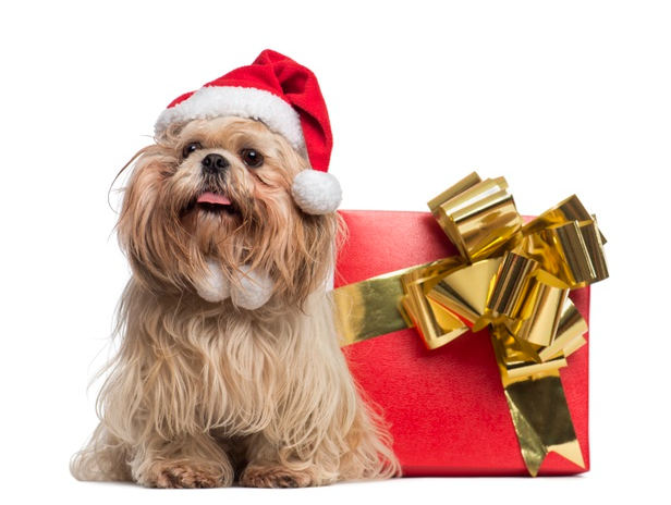 7 Christmas Safety Tips for Pets