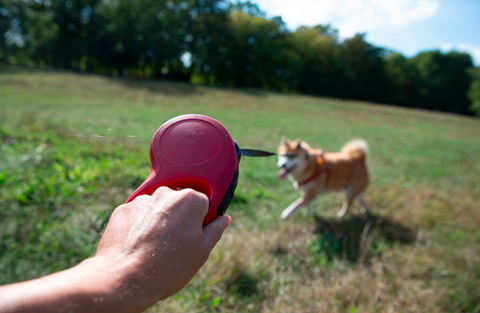 How to know if your Dog needs more Exercise