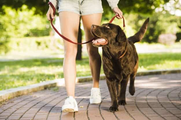How to Train Your Dog for Off-Leash Walks