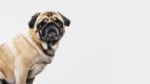 Is your behavior causing  your dog's anxiety?