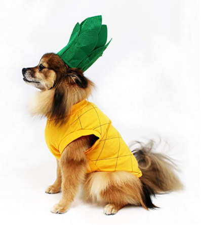 Top 10 Dog Costume Ideas for Halloween