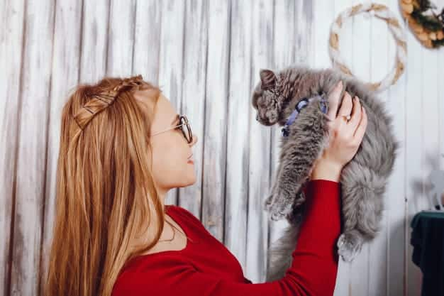 Tips for Getting a Cat to Like You