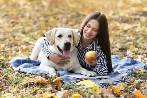 Top 10 Superfoods for Dogs