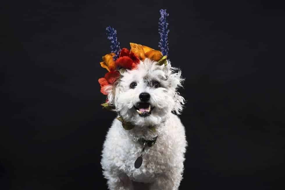 Top 5 Dog Breeds for Seniors and Retirees