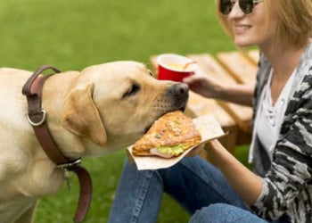 Toxic Foods to keep away from your Dog