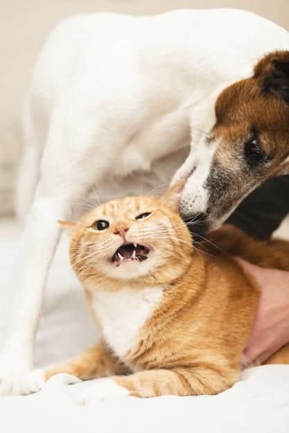 Why do Dogs and Cats Fight