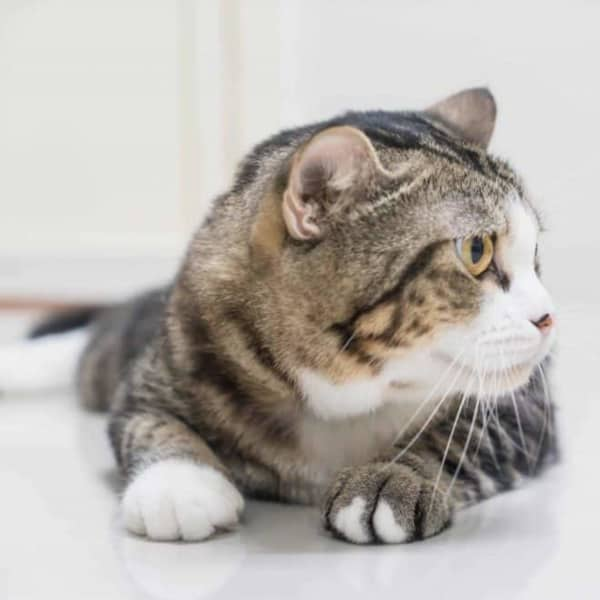 Common Mistakes Every Cat Owner Should Avoid