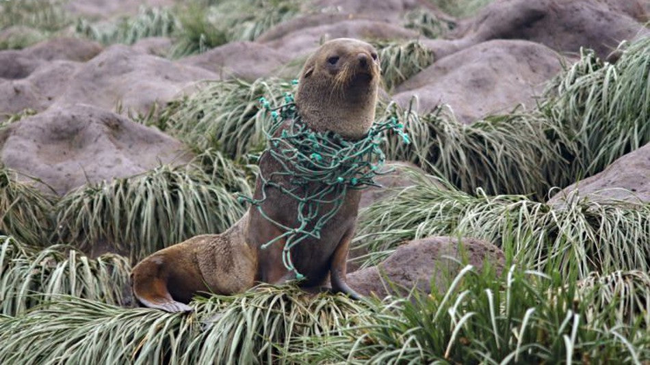 Plastic harms animals