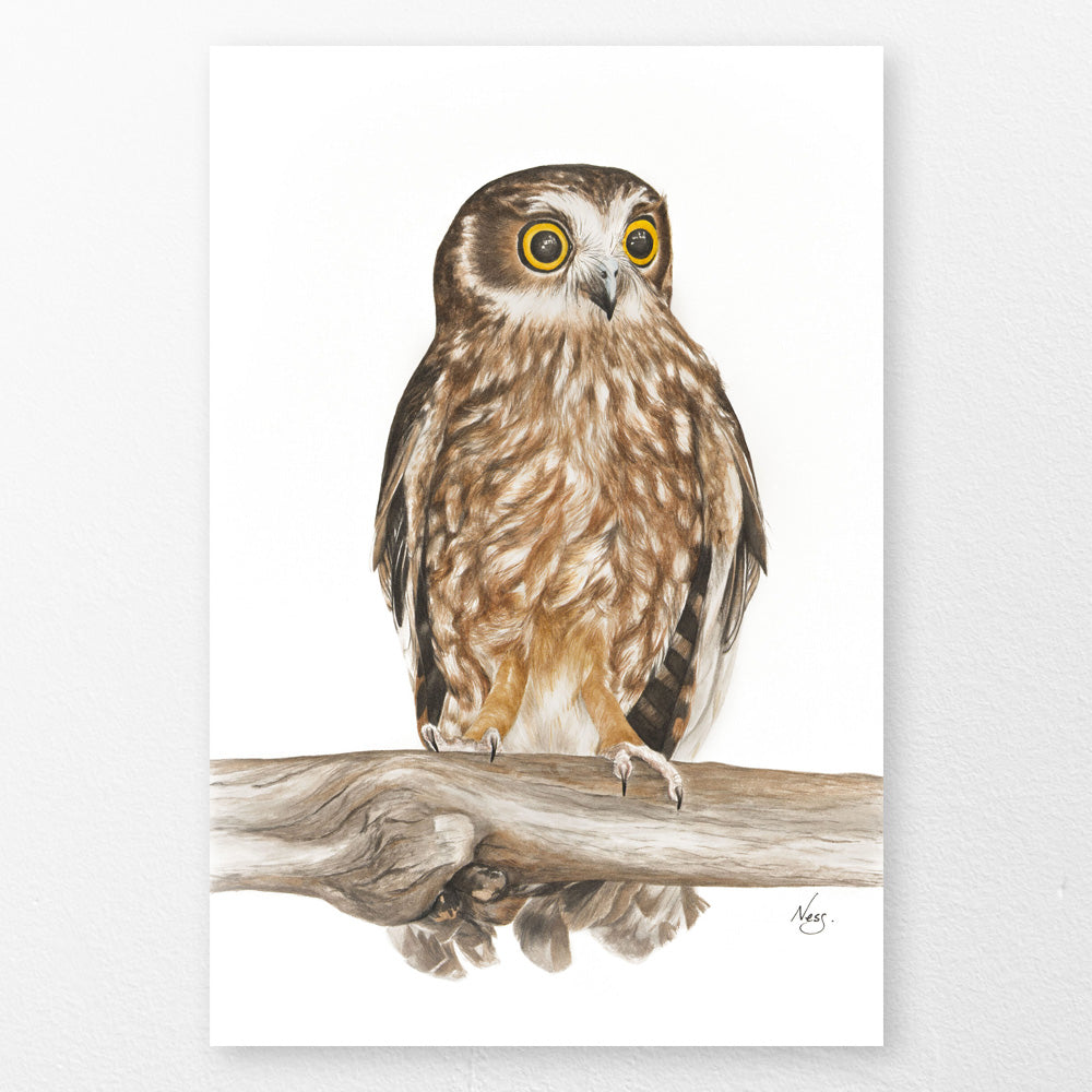 Boobook Owl Art Print by Vanessa Richardson