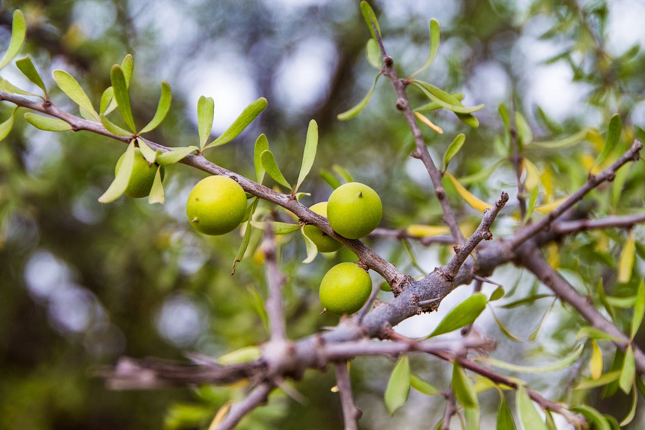 The difference between cacay oil and argan oil