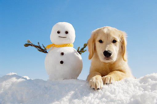 Fun in the Snow with Your Dog