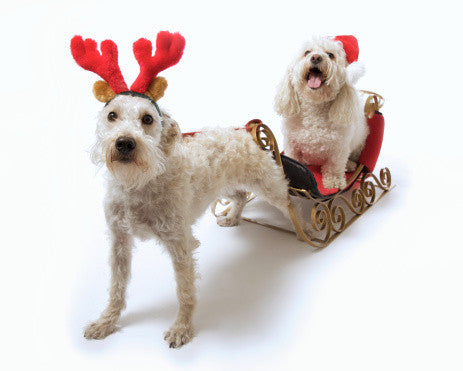 Make the Holidaze with your pets Stress-Free