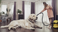 Keep your house cleaner even with multiple pets at home