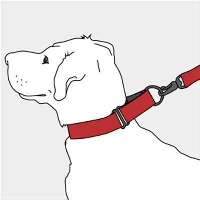 Pinwheel Martingale Greyhound Collar