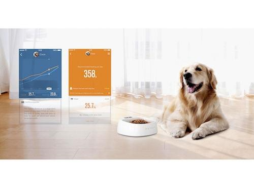 P2 Pet Health and Activity Tracker