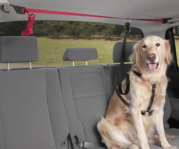 Dog Tether for Pickup Bed-SUV-Car