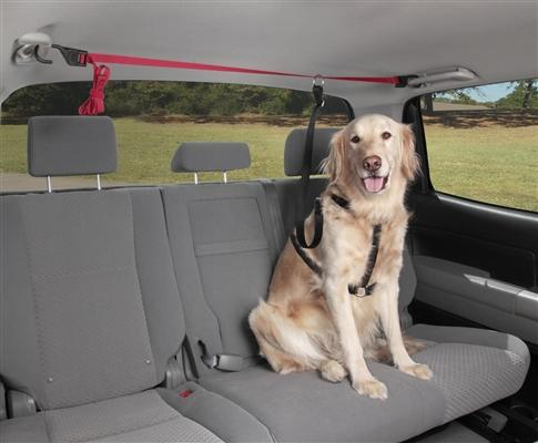 vehicle dog tether for pickup trucks and more