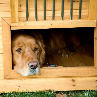Large Dog Home with Optional Heater