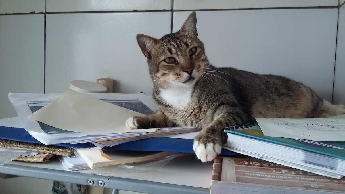 cat looking confused on books