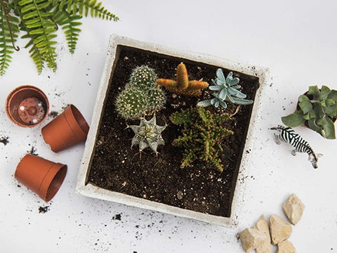 How to Create a Tabletop Garden in Your Shed