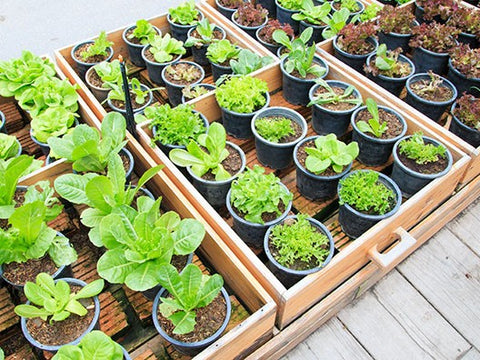 Indoor Plants and Vegetables for Your Shed