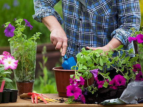 Spring Gardening Ideas to Make the Most of Your Garden