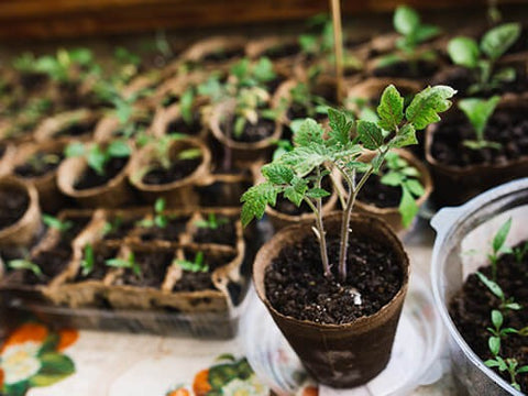 Grow Seedlings in Your Shed for Spring