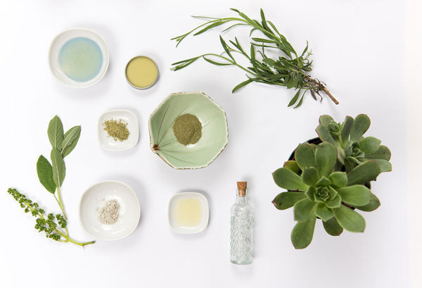bowls containing salves and powders surrounded by herbs and a succulent plant