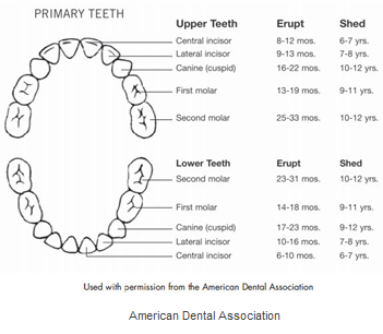 overview teeth