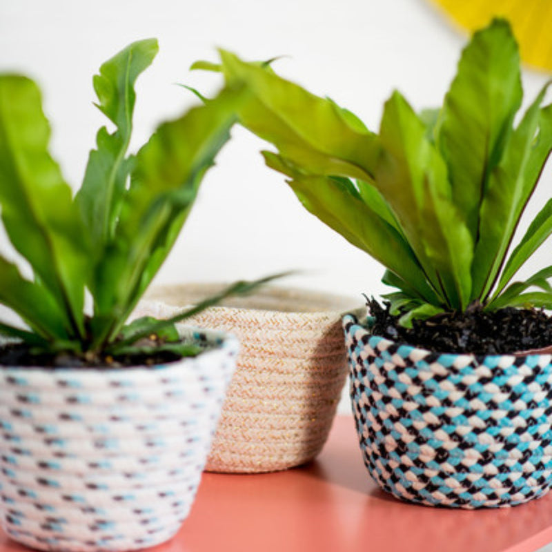 Mini_Planter_Baskets_Small_Woven_Baskets_Set_Milly_And_Eugene_Stitch_Piece_Loop_Noosa_Heads_Australia