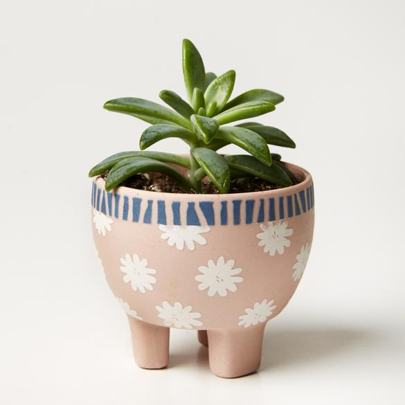 Paper Cut Planter - Pink Star