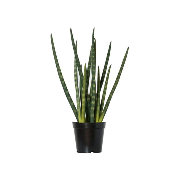 Artificial Plant - Snake Plant