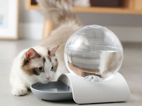 Automatic Water Feeder For Cats