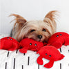 Cute Little Red Crab Mini Size Small Dog Toy!