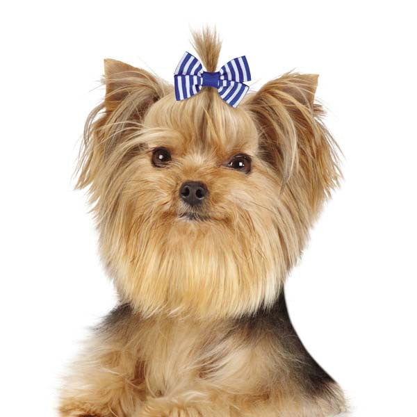 Candy Stripe Dog Hair Bows, Hair Accessory, Small Dog Mall, Small Dog Mall - Good things for little dogs.  - 1
